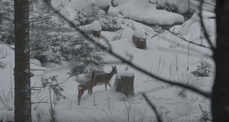 Zvířata v zimě. | Nový Fénix