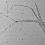 Hvezdna mapa Betty Hillove
