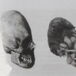 Jaromír Kozák, Stvoření člověka nebo evoluce, Lebky hybridu z Mexika vlevo a Peru vpravo