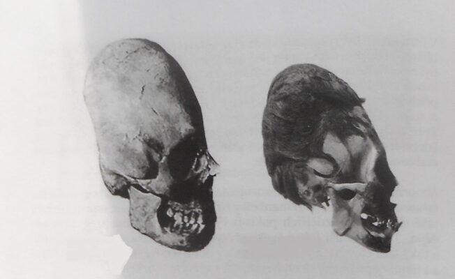 STVOŘENÍ člověka nebo evoluce? | Nový Fénix