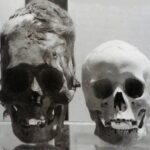 Jaromír Kozák, Stvoření člověka nebo evoluce, Rozdil mezi lidskou hlavou a hlavou z Paracasu